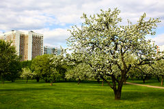 Beautiful park garden in spring Stock Images