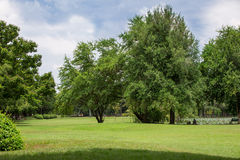 Beautiful park with green grass field and green fresh tree plant Stock Images