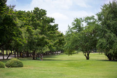 Beautiful park with green grass field and green fresh tree plant Stock Photography