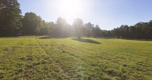 Beautiful park with green grass and trees on a sunny summer day.  stock video footage