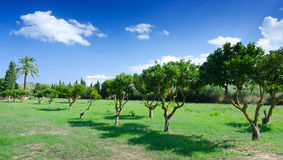 Beautiful park on Majorca Royalty Free Stock Images