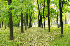 Beautiful park with many green trees Royalty Free Stock Image