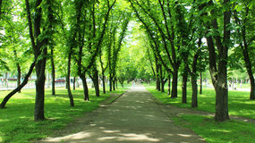 Beautiful park with many green trees Stock Photography