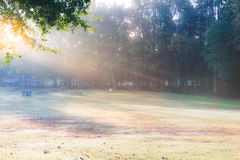 Beautiful park morning view Stock Photos
