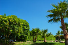 Beautiful park with Palm trees against the blue sky Stock Photography