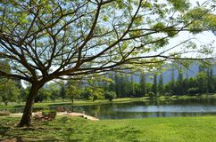 Beautiful Park in Phangnga,Thailand Royalty Free Stock Images