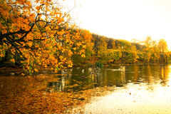 Beautiful park pond in autumn. Beautiful scenery in autumnal yellow park of Gdansk, Poland Royalty Free Stock Photos