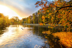 Beautiful park pond in autumn at sunset. Beautiful scenery in autumnal yellow park of Gdansk, Poland Royalty Free Stock Photo