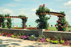 The beautiful park of roses and Balaton Lake seen from Balatonfured shore. Lake Balaton  is a freshwater lake in Transdanubian region of Hungary. It is the Royalty Free Stock Photography