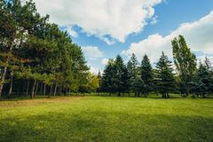 Beautiful park scene in public park with green grass field, green tree plant and a cloudy blue sky. Beautiful park scene in public park with green grass field royalty free stock images