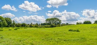 Beautiful park scene in public park with green grass field, green tree plant and a party cloudy blue sky.  Royalty Free Stock Photo