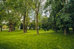 Park scene in public park with green grass field, green tree plant and a party cloudy blue sky. Beautiful park scene in public park with green grass field, green royalty free stock images