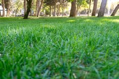 Beautiful park scene in public park with green grass field stock photography