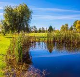 Beautiful park. Small quiet pond with water mirror reflecting the blue sky. Phenomenally beautiful park with autumn foliage. Concept Golf tourism Stock Images