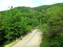 South korea park royalty free stock image