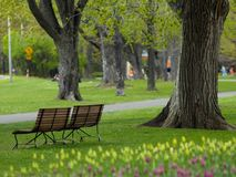 Beautiful park in spring Stock Photography