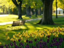 Beautiful park in spring. Tulips in foreground (E-1 + carl zeiss sonnar 85mm F2.8 Stock Photo