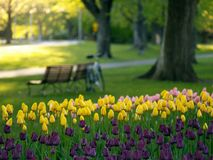 Beautiful park in spring. Tulips in foreground (E-1 + carl zeiss sonnar 85mm F2.8 Royalty Free Stock Images