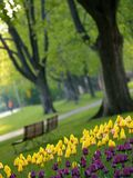 Beautiful park in spring Stock Images