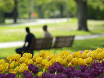 Beautiful park in spring. Tulips in foreground stock images