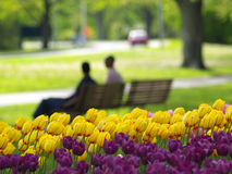 Beautiful park in spring. Tulips in foreground Royalty Free Stock Photography
