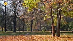 Beautiful park. In sunny autumn day stock video
