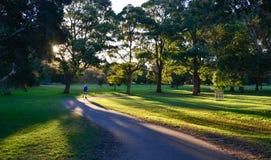 Beautiful park in Sydney. Stock Photos