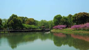 Beautiful park with trees, bushes, grass, garden path, pond on a sunny day. stock video footage