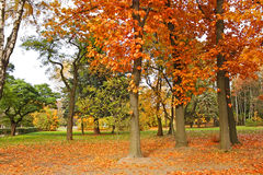 Beautiful park trees in calm autumn weather Royalty Free Stock Photo