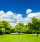 Beautiful park trees over blue sky. formal garden Stock Photos