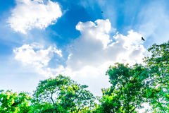 Beautiful park trees over blue Strong cloudy Royalty Free Stock Photos