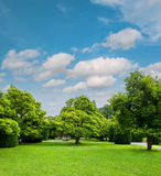 Beautiful park trees over cloudy  blue sky. Formal garden Royalty Free Stock Photography