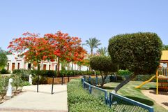 Beautiful park with tropical beautiful natural exotic plants, trees with red flowers delonix and palm trees with green leaves, whi. Te petals on a tropical Royalty Free Stock Photography