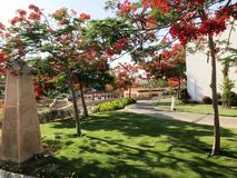 Beautiful park with tropical beautiful natural exotic plants, trees with red flowers delonix, petals white buildings in a tropical. Southern seaside resort Royalty Free Stock Image