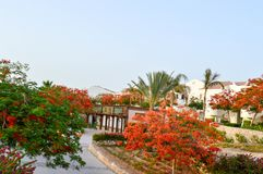 Beautiful park with tropical beautiful natural exotic plants, trees with red flowers delonix and palm trees with green leaves, whi. Te petals on a tropical Stock Photo