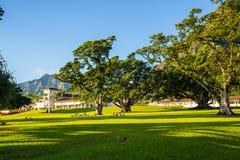 Beautiful park with university of Hawaii stock photos