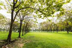 Beautiful park view Royalty Free Stock Image