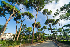 Beautiful park of Villa Borghese, Rome Royalty Free Stock Images