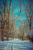 Beautiful park in winter Royalty Free Stock Photo