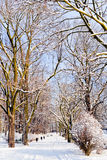 Beautiful park in winter Royalty Free Stock Photos