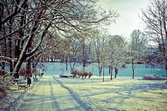 Beautiful park in winter Stock Photos