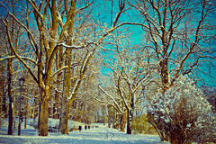 Beautiful park in winter Stock Image