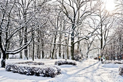 Beautiful park in winter Royalty Free Stock Image