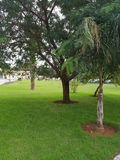 A beautiful park with wonderful greenery in algeirs capital of algeria royalty free stock photo