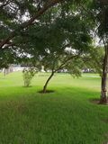 A beautiful park with wonderful greenery in Algiers stock photo