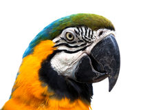 Beautiful parrot Stock Photography