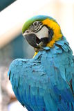 Beautiful Parrot Royalty Free Stock Image