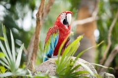 Beautiful parrot. In a zoo in Bangkok Stock Photos