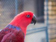 Beautiful parrot. Amazing photo of parrot on summer day Stock Image