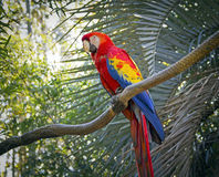 Beautiful Parrot Royalty Free Stock Photography